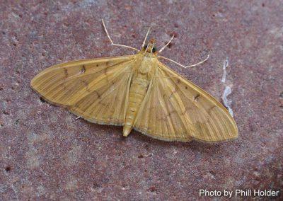 The Alamo Moth